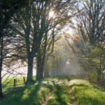 Le_Chemin_de_meditation
